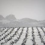 La importancia del frío y la nieve en el viñedo